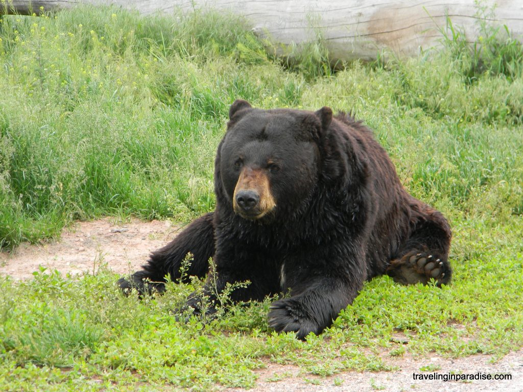 Bear Up Close